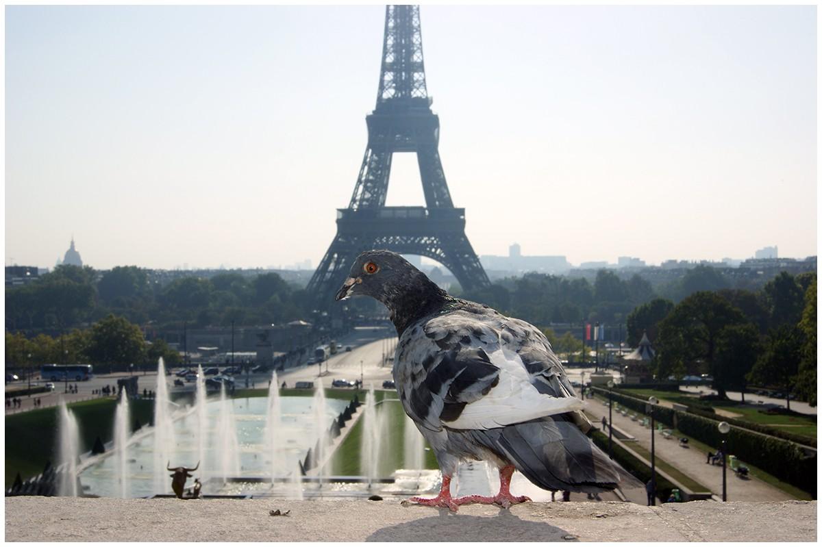 Taube in Paris
