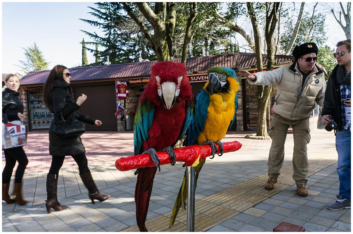 Papageien in Sotschi