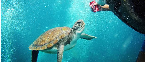 Schildkröte auf Teneriffa