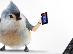 Modern Love Birds