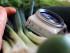 Geschichtetes Lachstatar mit Koriandercreme, Gurke und asiatischem Möhrensalat
