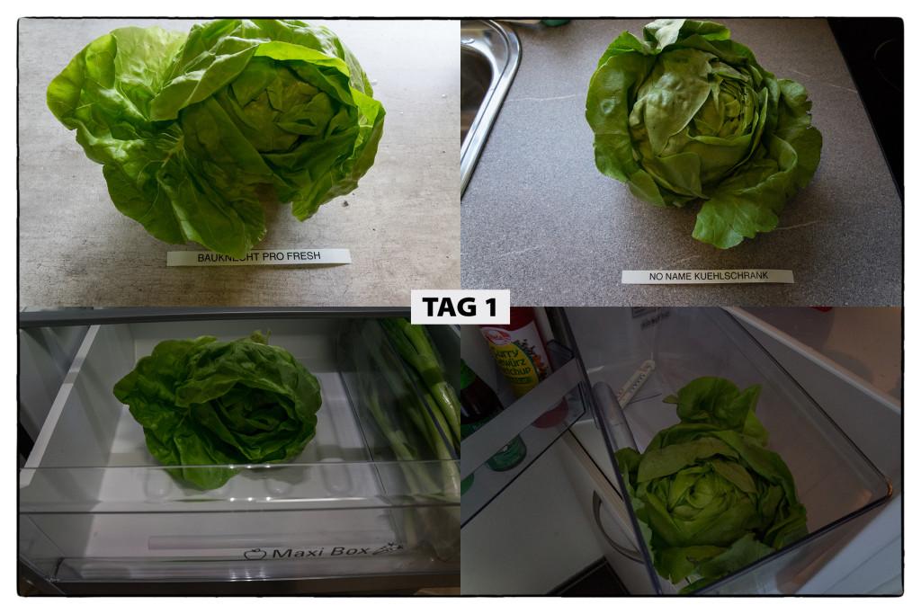 Tag 1 Kopfsalat-Test