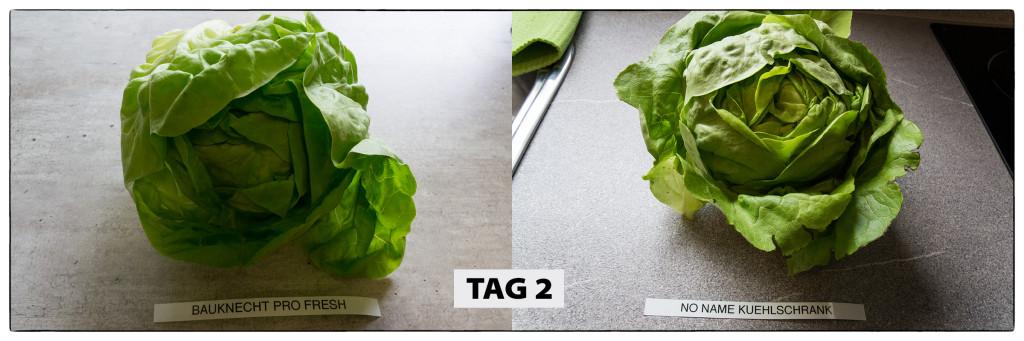 Tag 2 Kopfsalat-Test