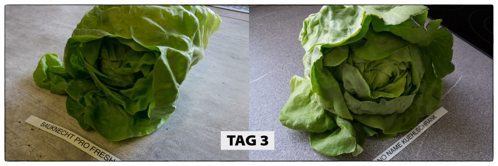 Tag 3 Kopfsalat-Test
