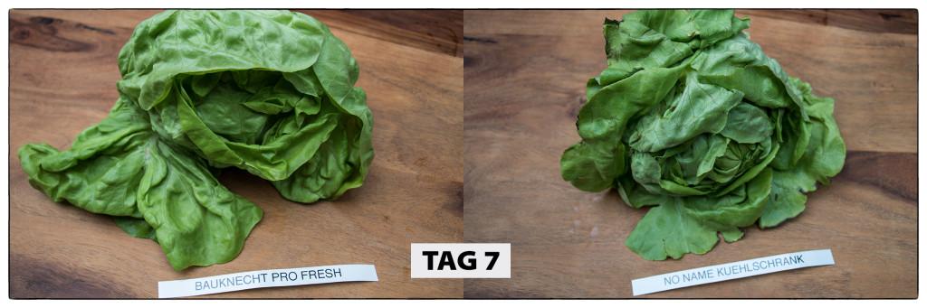 Tag 7 Kopfsalat-Test
