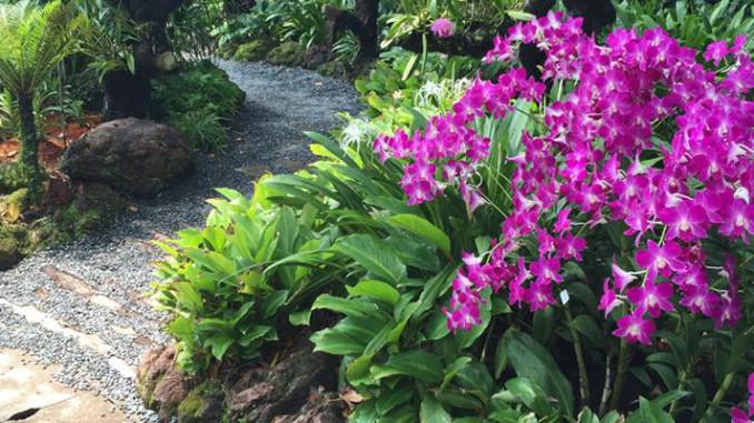 Werbung | Botanischer Garten Singapur – Die grüne Seele der Metropole #CelebrateSG50