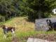 Urlaub mit Hund im Schwarzwald