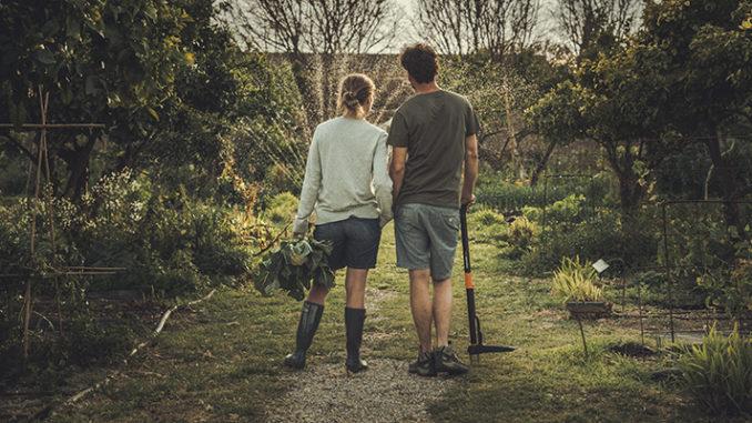 Werbung | Bequem Unkraut im Rasen entfernen – Fiskars Unkrautstecher helfen dabei