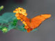 Werbung | Schmetterlinge hautnah erleben – Schmetterlingshaus Maximilianpark Hamm