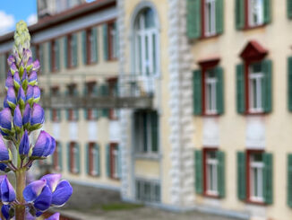 Werbung | Alpinum Schatzalp: Die Naturschätze rund um Davos mit allen Sinnen entdecken