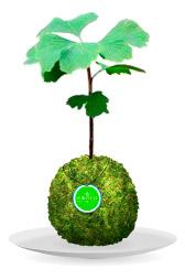 Werbung   Kibonu – ein Baum auf vier Pfoten